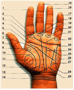 lectura de lineas de las manos